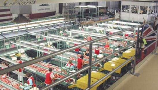 Standar Keamanan Pabrik Makanan