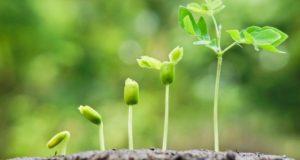 Faktor Pertumbuhan Tanaman